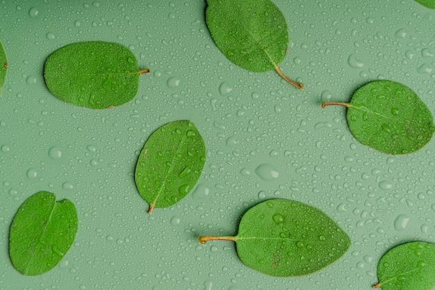 Wzór wykonany z zielonych liści z kroplą deszczu płaski widok z góry