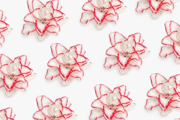 Wzór z kwiatów białej lilii z czerwoną obwódką piwonii