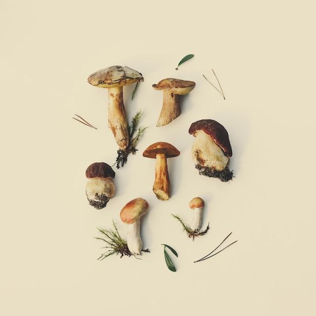 Wzór z różnych surowych grzybów leśnych z cieniem słonecznym