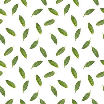 Wzór z wizerunkiem liści mięty.