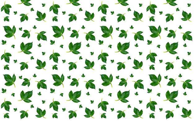 Wzór z zielonymi liśćmi róży na białym tle