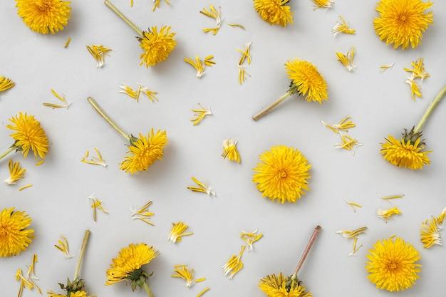 Wzór z żółtymi kwiatami mniszka lekarskiego na szarym tle i oderwanymi płatkami. dzikie kwiaty i modny kolor oraz nowoczesny minimalistyczny flat lay.