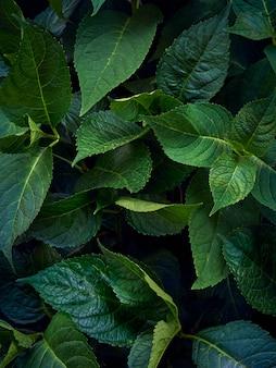 Wzór zielonych liści.