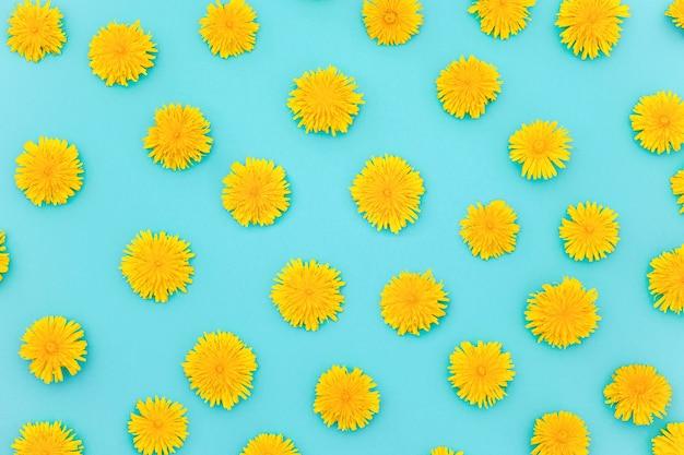 Wzór żółty mniszek na niebieskim tle, jako tło lub tekstura. wiosna, lato tapety do swojego projektu. widok z góry układ płaski.