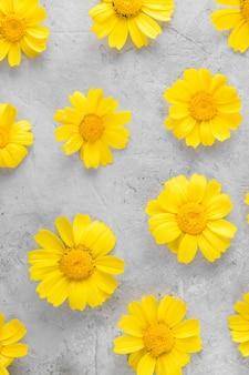 Wzór żółtych kwiatów składa się z rumianków lub stokrotek