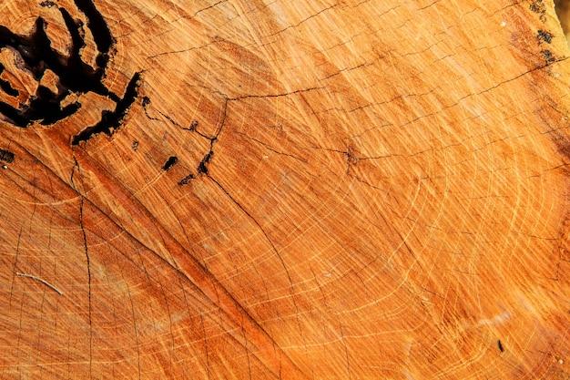 Wzorów tła kikut drewna.
