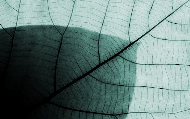 Wzory liści