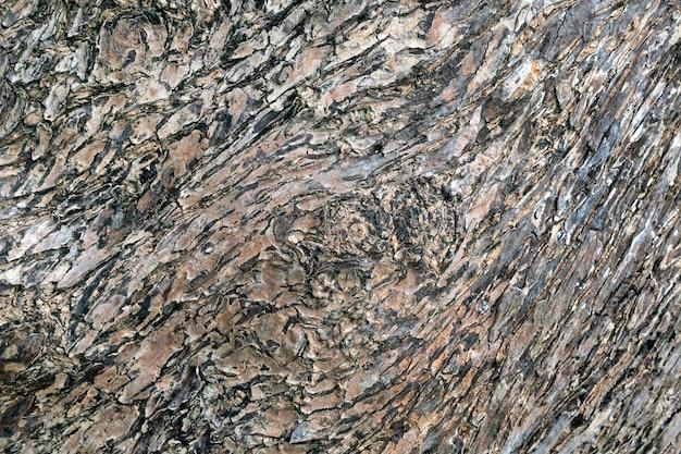 Wzorzysta powierzchnia kory