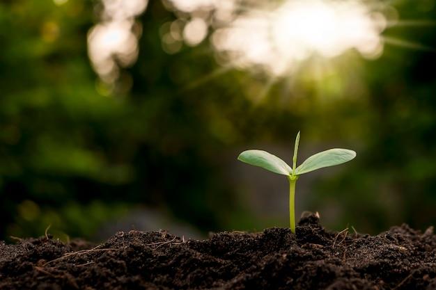 Wzrost drzew i drzewa rosnące na koncepcji ochrony gleby, zasobów naturalnych i środowiska.