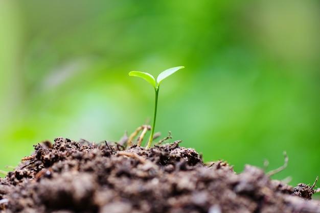 Wzrost młodych roślin na neutralnej zieleni