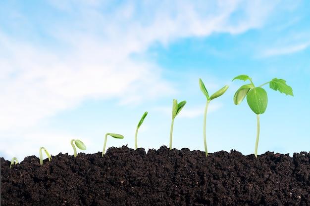 Wzrost nowego życia na tle