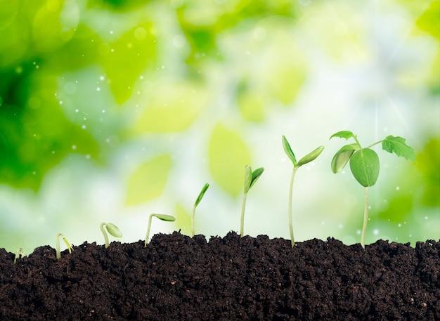 Wzrost nowego życia w tle
