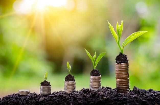 Wzrost pieniądza oszczędność pieniędzy. górne drzewa monety do pokazanego pojęcia rosnącego biznesu