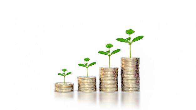 Wzrost roślin na monety na białym tle pomysłów na rozpoczęcie biznesu i budowanie biznesu do sukcesu