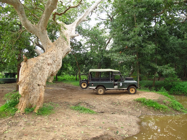 Yala / sri lanka - 09.01.2011: samochód na safari w parku narodowym yala na sri lance