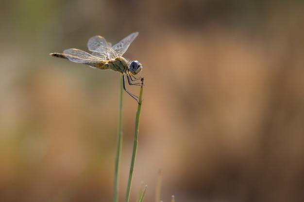 Yellow dragonfly w swoim naturalnym środowisku.