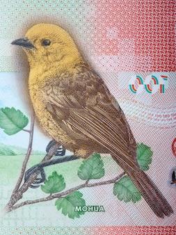 Yellowhead - mohua portret z dolara nowozelandzkiego
