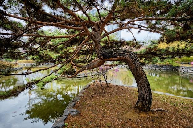 Yeouido park w seulu, korea