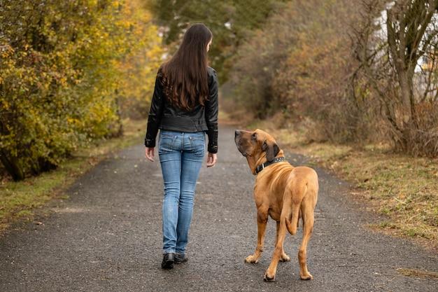 Yong kobieta z dużym psem rasy fila brasileiro w parku jesień