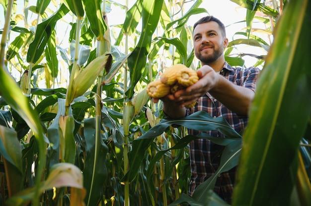 Yong przystojny agronom w polu kukurydzy i bada uprawy przed zbiorami. koncepcja agrobiznesu. inżynier rolnictwa stojący w polu kukurydzy.