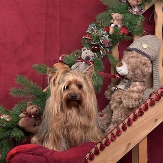 Yorkshire pies z dekoracjami świątecznymi