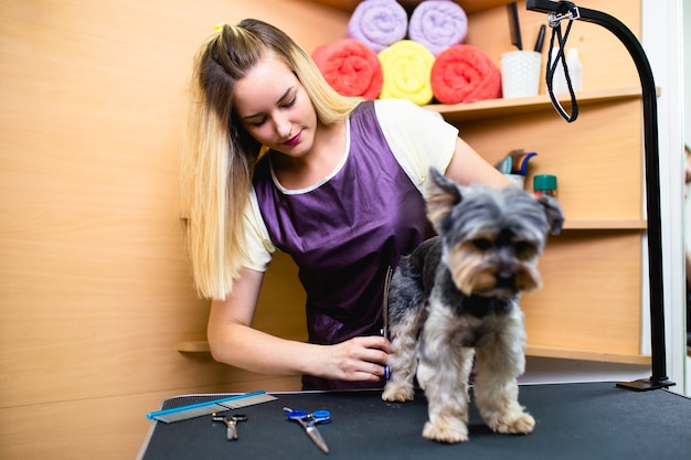 Yorkshire terrier w salonie fryzjerskim.