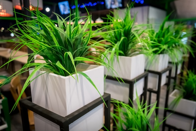 Yucca, roślina domowa w doniczce. biały kwadratowy garnek. nowoczesny wystrój wnętrz. zagospodarowanie terenu instytucji publicznych.