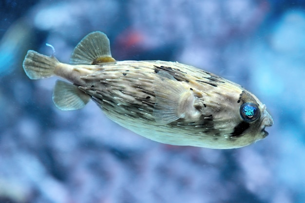 Z bliska jeżowate ryby