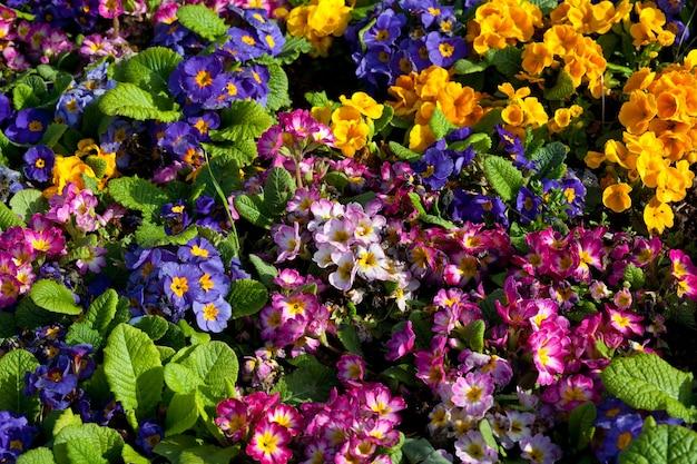 Z bliska strzał pięknych kwiatów. nadaje się do kwiatów w tle.