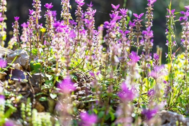 Z bliska strzał pięknych kwiatów. nadaje się do tła kwiatowego.