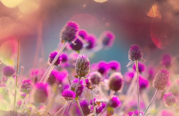 Z bliska strzał pięknych kwiatów.