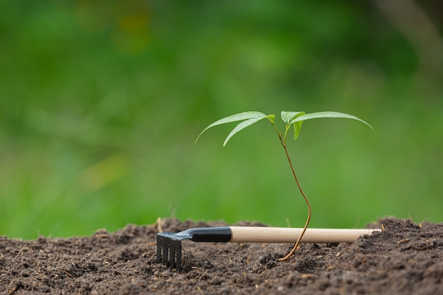 Z bliska zdjęcie sadzonki rośliny rośnie