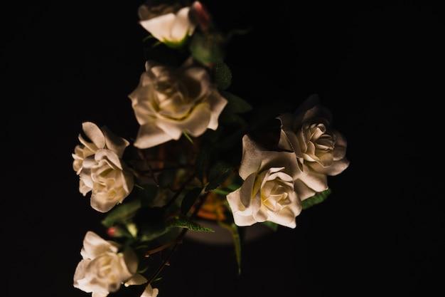 Z góry eleganckie róże