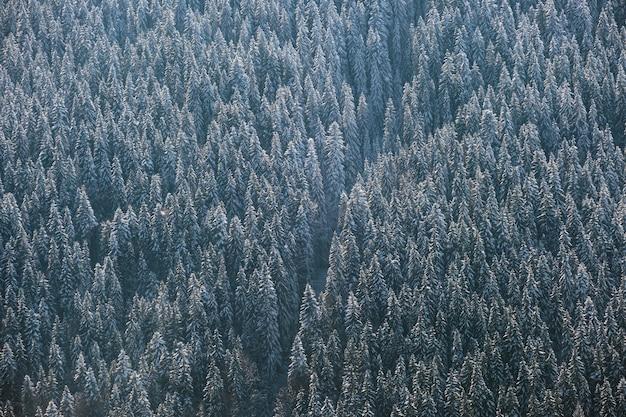 Z góry na dół widok z lotu ptaka pokryty śniegiem wiecznie zielony las sosnowy po obfitych opadach śniegu w zimowych lasach górskich w zimny, spokojny dzień.