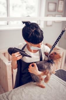 Z suszarką nadmuchową. kobieta w masce patrząca na psa i używająca suszarki podczas suszenia psa