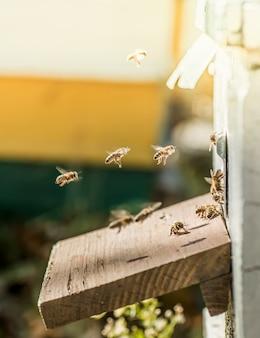 Z ulu wychodzą pszczoły.