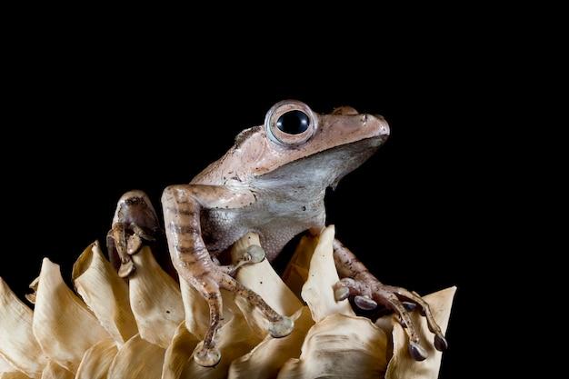 Żaba na suchych liściach z czarnym tłem