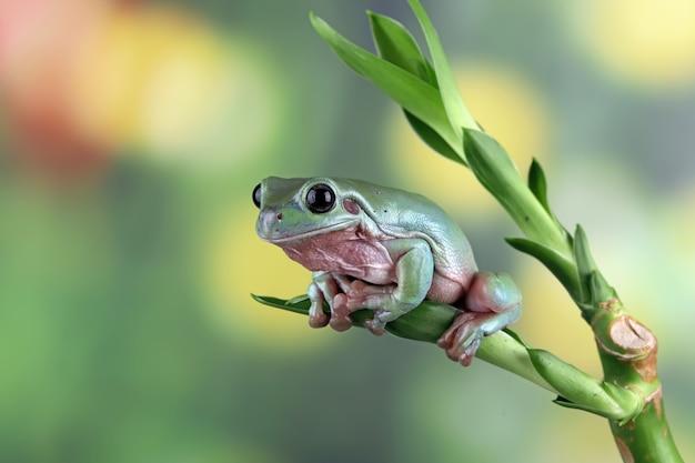 Żaba na zielonych liściach
