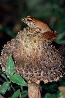 Żaba odpoczywa na grzybie