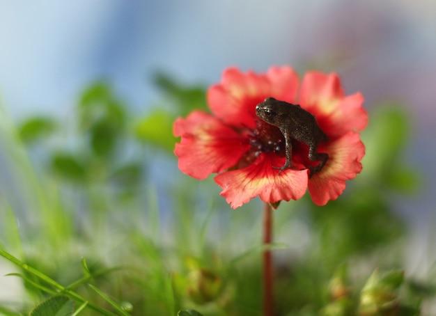 Żaba siedzi na kwiatku