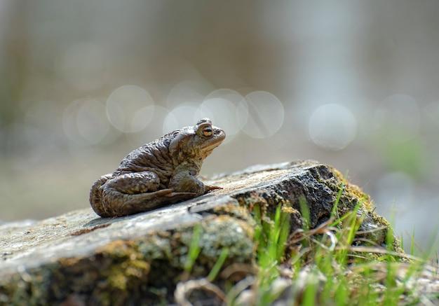 Żaba w lesie