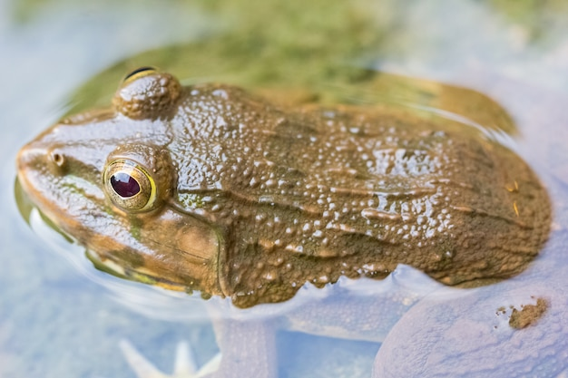Żaba w wodnym natury tle