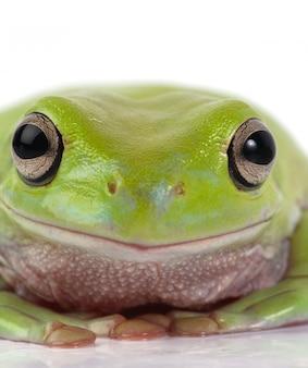 Żaba z bliska