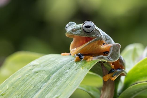 Żaba z uśmiechniętą twarzą na liściu