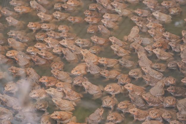 Żaba zwierzęca w gospodarstwie ekologicznym