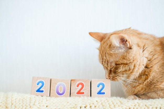 Zabawne grube rude kostki z numerami 2022.