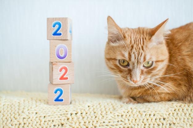 Zabawne grube rude kostki z numerami 2022