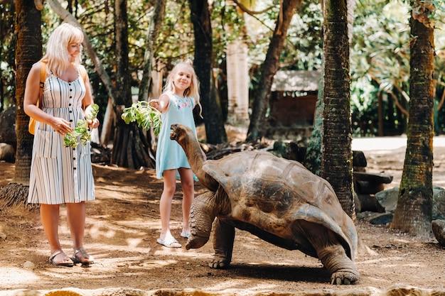 Zabawne zajęcia na mauritiusie. rodzina karmiąca gigantycznego żółwia w zoo na wyspie mauritius.