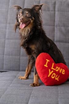 Zabawny brązowy terier rosyjski zabawka pies leżący na kanapie z wielkim sercem pluszaka. walentynki.