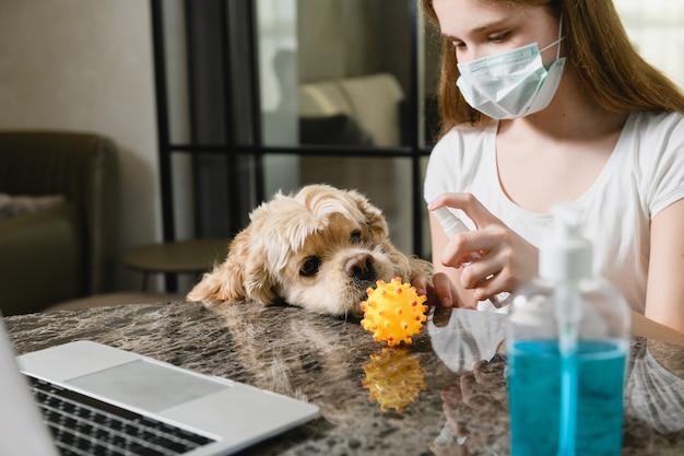 Zabawny cocker spaniel chce bawić się gumową piłką, dziewczyna dezynfekuje ją środkiem dezynfekującym, pracuje z laptopem, nosi maskę medyczną w okresie izolacji w domu